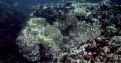 fish-save-reef