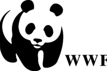 wwf-cinema-contest