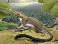 first-ancestor-placental-mammals