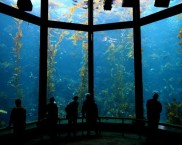 best-aquariums