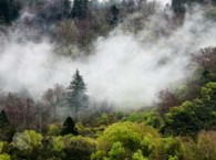 world-bank-allots-100-million-for-growing-forests-in-china