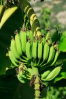 packaging-made-from-banana-plants-an-a-peeling-alternative
