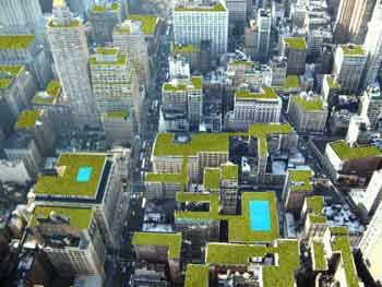 Примеры устойчивых ландшафтов - обустройство зеленых крыш