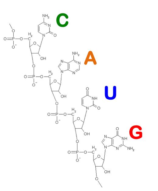 EteRNA - своеобразный конструктор из составляющих молекулы РНК