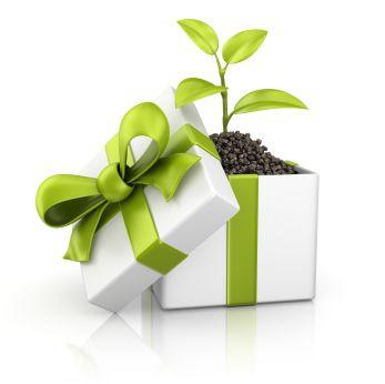 Рождественский подарок вполне может быть экологичным!