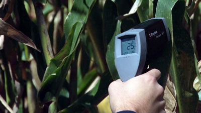Ученые измеряют температуру на листьях кукурузы