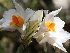 Вьетнамская орхидея