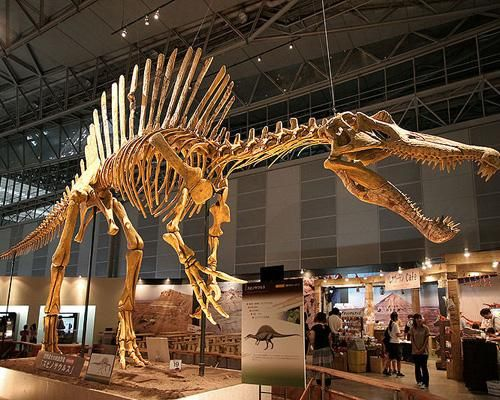 10 самых больших животных Земли - Экологический дайджест FacePla.