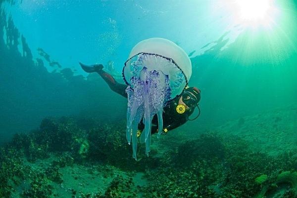 Медузы-охотницы в роли суперкомпьютеров