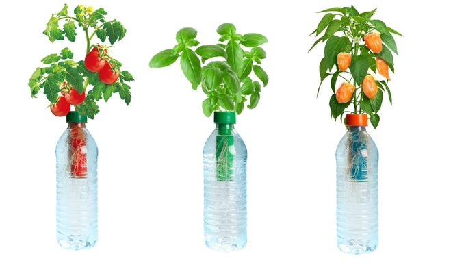 Микро гидропоника в пластиковых бутылках