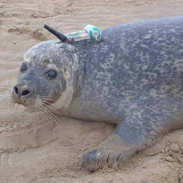 Оффшорные ветряные фермы изменяют среду обитания тюленей