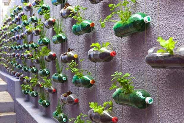Унылую серую стену сарая или внутреннюю поверхность забора легко превратить в модные вертикальные сады, используя для этого всё ту же использованную пластиковую бутылку.