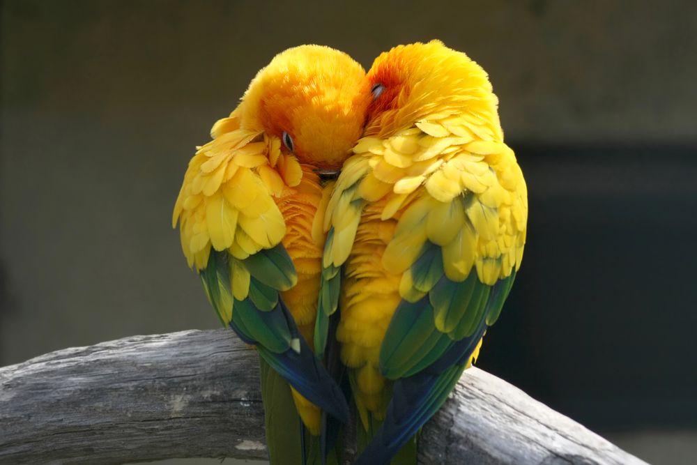 11 животных, которые выбирают одну пару на всю жизнь. Facepla.net последние новости экологии