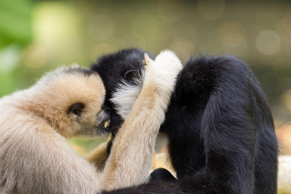 11 животных, которые выбирают одну пару на всю жизнь