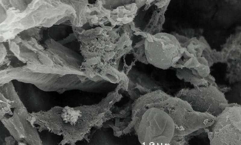 Биофильтр из скорлупы арахиса