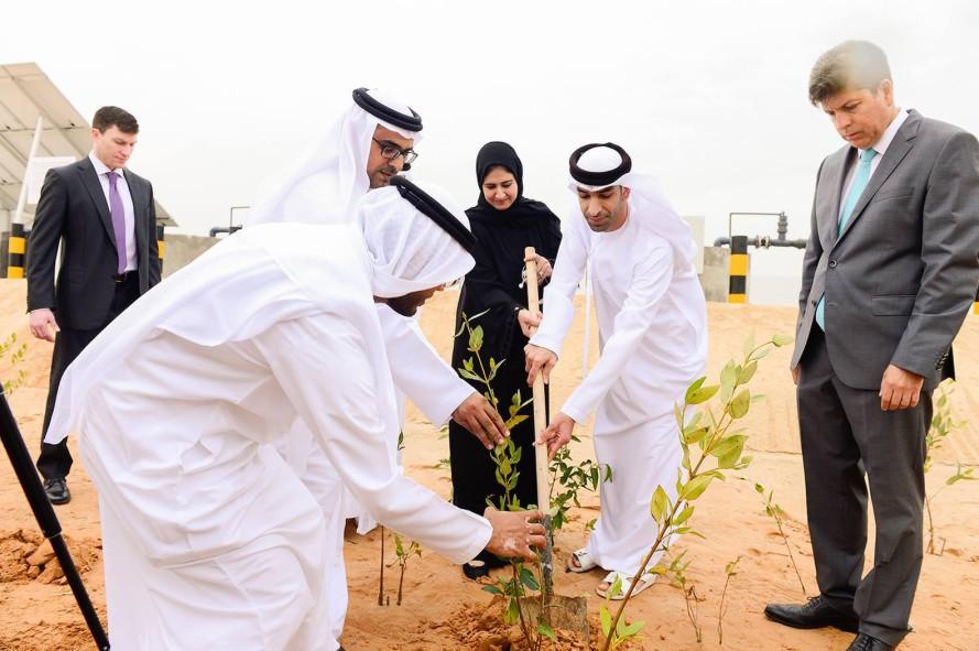 Первая в мире ферма, производящая продовольствие и топливо в пустыне. Facepla.net последние новости экологии
