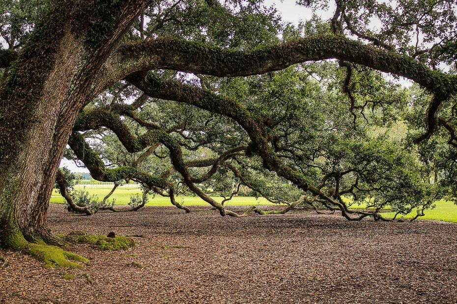 Случайные вибрации превращают деревья в электростанции. Facepla.net последние новости экологии