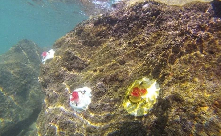 Пластик в океане для сохранения экологии рифов