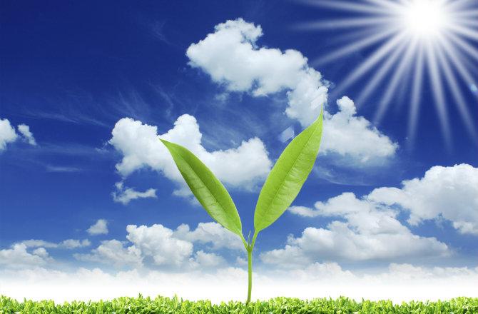 Производство биотоплива с помощью обратного фотосинтеза. Facepla.net последние новости экологии
