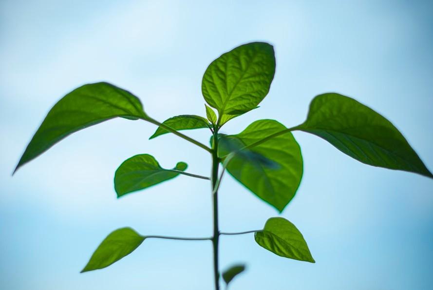 Производство биотоплива с помощью обратного фотосинтеза