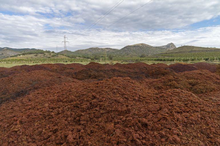 Отходы производства вина могут стать сырьем для биотоплива. Facepla.net последние новости экологии