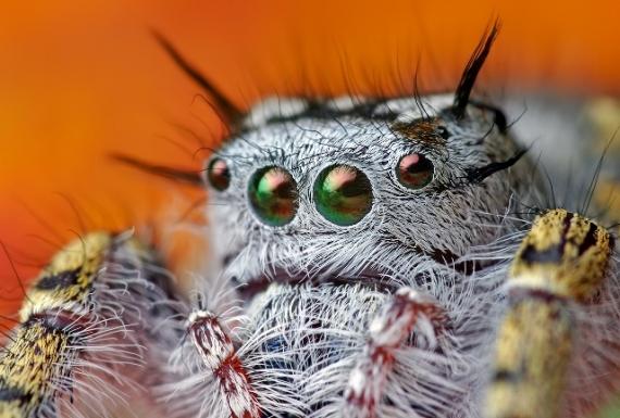 15 эмоций мира насекомых