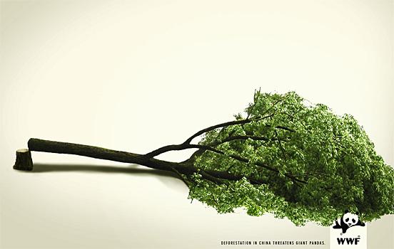 Упавшее дерево - воронеж против дообычи никеля