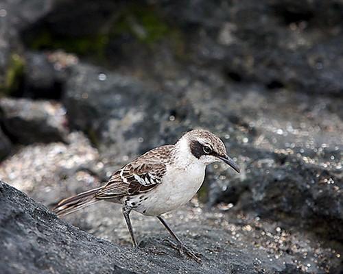 14 уникальных животных Галапагосских островов