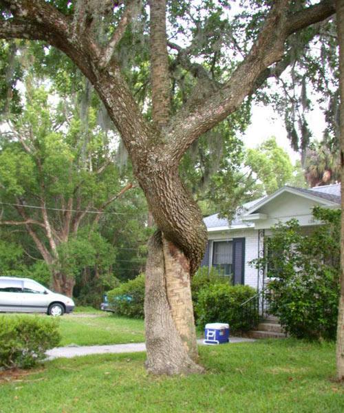 8 самых зловещих деревьев на Земле