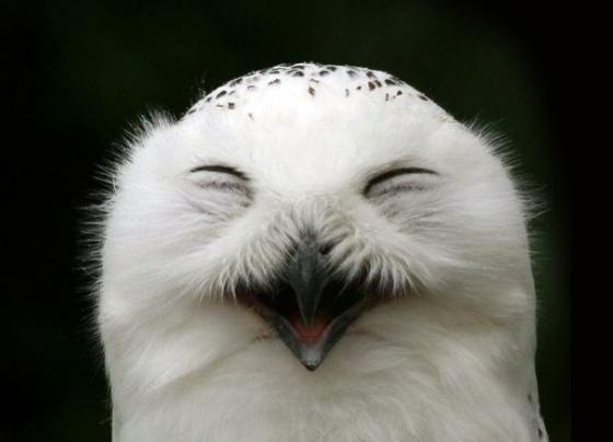Биологическая загадка: как совам удается так крутить головой ...