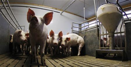 С другой стороны, в исследовании, опубликованном в июньском номере рецензируемого научного журнала Journal of Organic Systems учеными из Австралии, работавшими с ветеринарами и фермером из Айовы, говорится о том, что свиньи, рацион которых состоит исключительно из генетически модифицированного зерна, значительно чаще страдают воспалением желудка, чем их сородичи с традиционным кормом