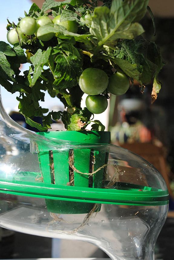 PlanTree – высокотехнологичный сад-огород прямо на кухне