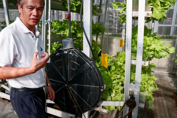 vertical-farming-system-SkyGreens