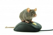 rat-vs-google