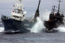 japan-suspend-whaling-hunt