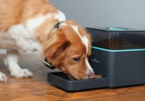 pintofeed-pet-feeder
