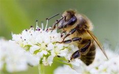 eu-to-ban-neonicotinoid-pesticides