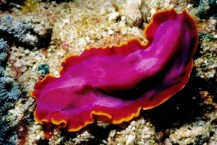 flatworms-regrow-their-heads