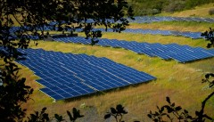 solar-farms-enhance-biodiversity