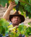 new-zealand-wine-carbon-footprint