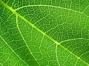 зелёный лист