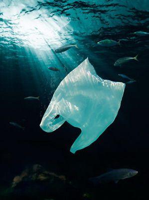 Сан-Хосе запрещает пластиковые пакеты с 2012