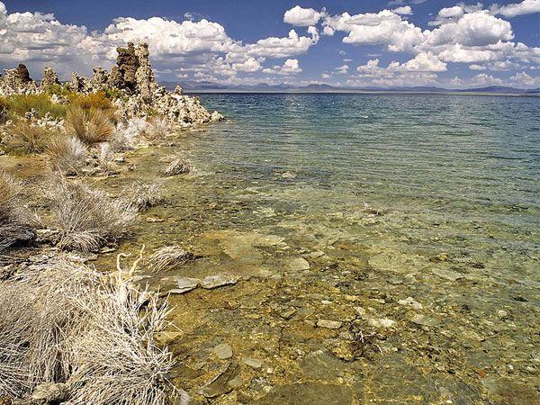 В калифорнийском озере Моно обнаружена новая форма жизни
