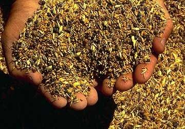 Семена для семенных шариков