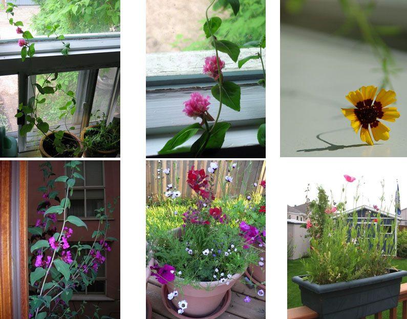 Цветы на окне - живой результат переработки бумаги