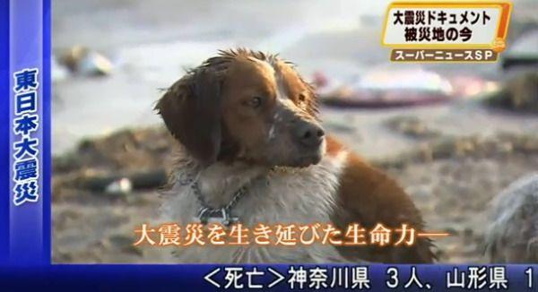 Собака не покинула своего раненого друга