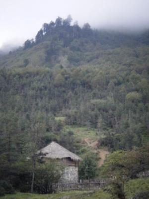 Программа облесения склонов в Китае