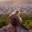 обезьяны и город