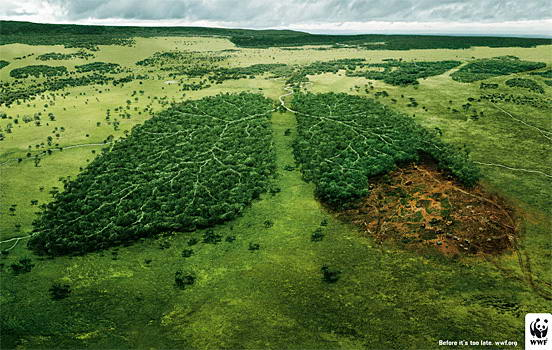 wwf-ads-creative-01